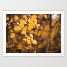 Autumn Leaves - Eastern Sierras Art Print