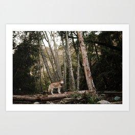 Husky in Forest Art Print