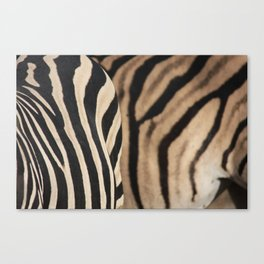 Herd Formation Canvas Print