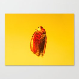 Bugged #14 Canvas Print