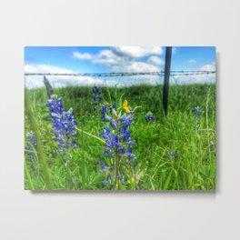 Bluebonnet 1 Metal Print
