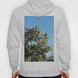 Tall Tree Hoody