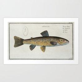 Vintage Illustration of a Brown Trout (1785) Art Print