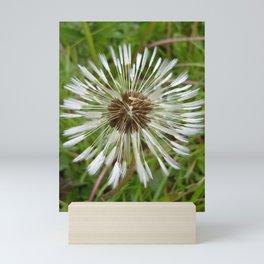 Dandelion In The Rain Mini Art Print