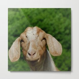 Cute Goat with long Ears Metal Print