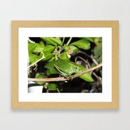 Katydid Framed Art Print