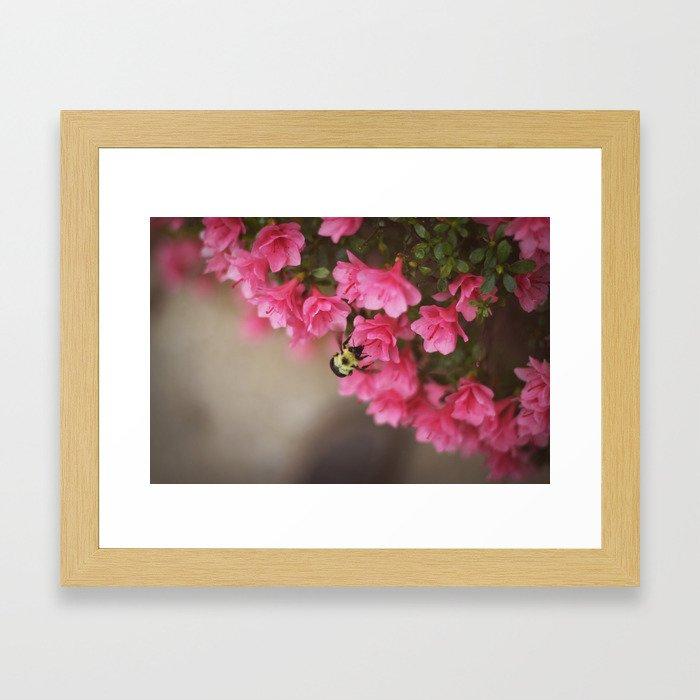 Top View Bumblebee Framed Art Print