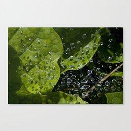 Captured Drops Canvas Print