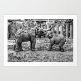 Elephants at Blackpool Zoo Art Print