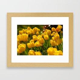 Yellow Tulips Framed Art Print