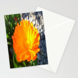 Bright Orange Marigold In Bright Sunlight Stationery Cards