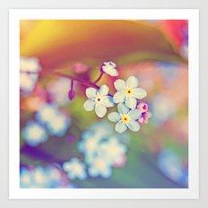 Rainbow Flowers Nature Photography Art Print