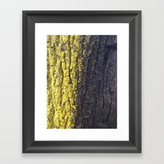 Abstracts in Nature Series -- Maple Bark Framed Art Print