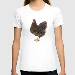 Wyandotte bantam Chicken hen golden laced in white background T-shirt