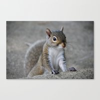 squirrel Canvas Prints featuring Squirrel by Charlene McCoy