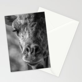 The Most Interesting Stationery Cards