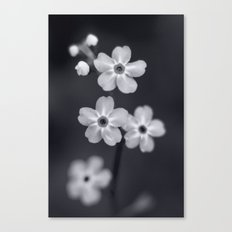 Forget me not BW Canvas Print