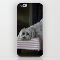 sofa iPhone & iPod Skins featuring Me and My Sofa by Anthony M. Davis