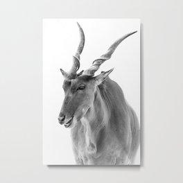 Common Eland Metal Print