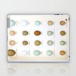 Vintage Bird Eggs  Laptop & iPad Skin