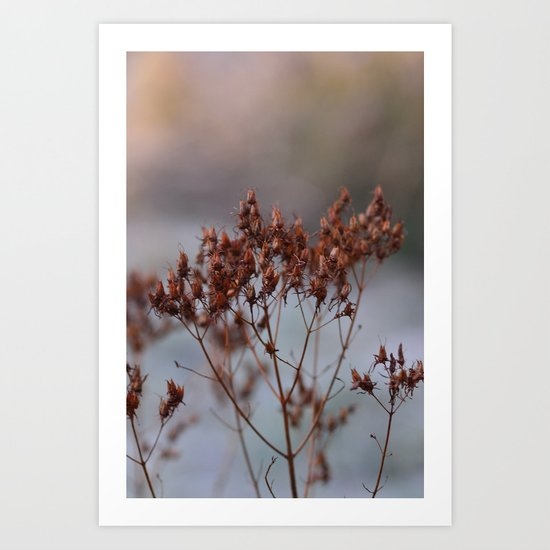 In The Frost Art Print