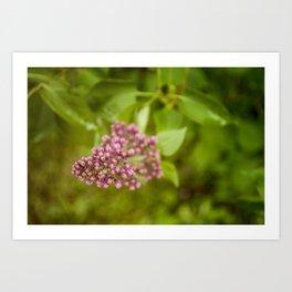 Boutons de lilas (Lilac Bud) by Althéa Photo Art Print