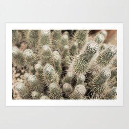 Desert Cactus Garden  | Modern Botanical Photography | Nature Art Print
