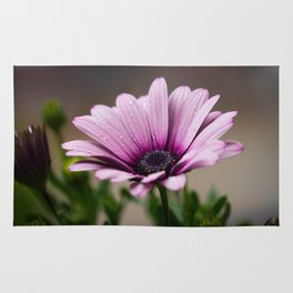 Pink-Violet Gerbera Flower with Tiny Raindrops Rug