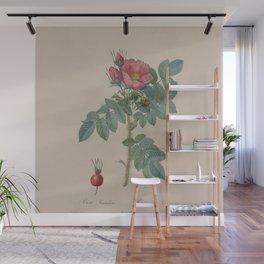 Rosa JP Redoute Wall Mural