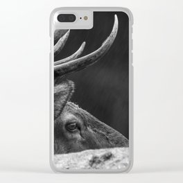 Rain Falls on a Bull Roosevelt Elk in Redwood National Park Clear iPhone Case