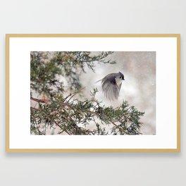 Fly-away Tufted Titmouse Framed Art Print