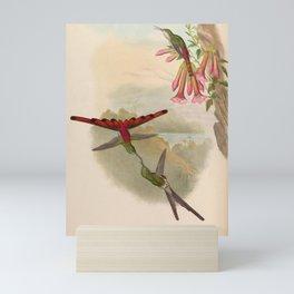 Vintage Print - A Monograph of the Hummingbirds (1849) - Sappho Comet Mini Art Print