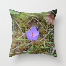 Wild Cyclamen In Calabria Throw Pillow
