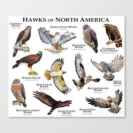 Hawks of North America Canvas Print