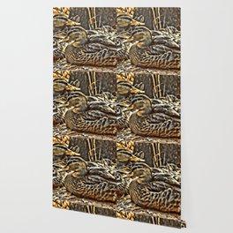 Laying Mallards Wallpaper