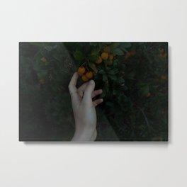 Fruit within Reach Metal Print