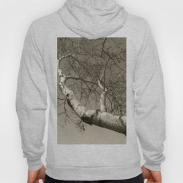 Birch tree #01 Hoody
