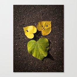 Leaf Love No.2 Canvas Print