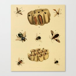 Bees Wasps And Honeycomb Canvas Print