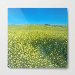 Field of Mustard Grass With Big Blue Sky Metal Print