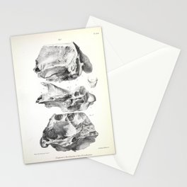 The Zoology of the Voyage of H.M.S. Beagle 1840 - Fossil Mammalia - Glossotherium Skull Stationery Cards