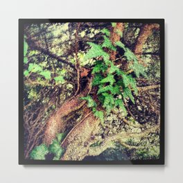 Tangle of Gnarly Branches & Ivy Metal Print