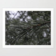 The Pines Art Print