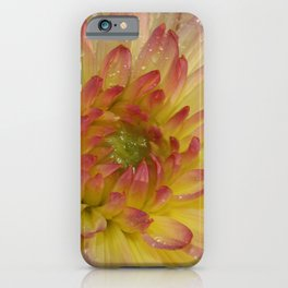 Dahlia 091019 iPhone Case