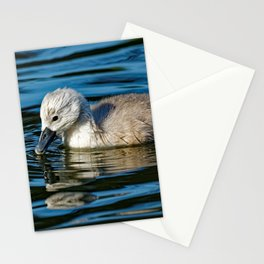 Mute Swan Cygnet Stationery Cards