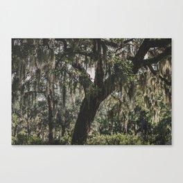 Savannah Spanish Moss Canvas Print