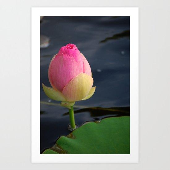 Lotus Blossom 4 Art Print