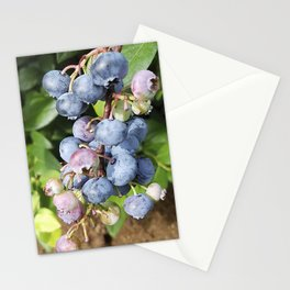 Ready to pick blueberries? Stationery Cards