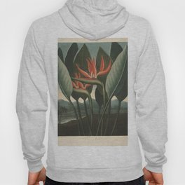 Henderson, Peter C. (d.1829) - The Temple of Flora 1807 - The Queen (Bird of Paradise Flower) Hoody