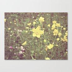 buttercups galore Canvas Print